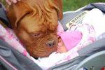 Родители оставили малыша с собакой. Когда вернулись, обнаружили ЭТО!