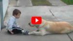 Лабрадор встретил ребенка с синдромом Дауна. Реакция пса поражает!