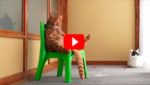 Подборка с очень наглыми кошками