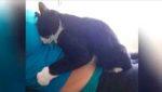 Кошка не слазила с живота беременной девушки. Но самое интересное произошло после родов…