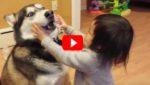 Пес резко кусается. Реакция малыша? Бесценна!