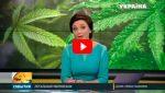 Легальная марихуана