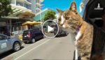 Книга рекордов Гиннесса вручила этой кошке звание самой умной кошки в мире! Оцените её способности!