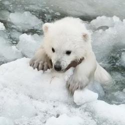 Медведица пыталась спасти своего малыша, и ей бы это не удалось, если бы не они...
