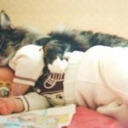 Холодной зимой его оставили в подвале. Кошка помогла выжить малышу...
