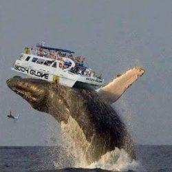 Самые удивительный и невероятные кадры с китами...