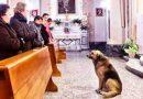 Пес приходит каждый день в церковь и сидит там часами. Причина трогает до слез…