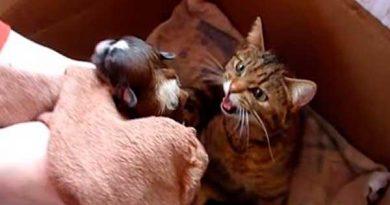 Они принесли щенка маме-кошке. А теперь посмотрите на реакцию мурки!