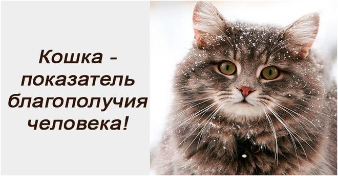 А вы знаете, что именно кошка является тем животным, которые указывает на показатель благополучия…