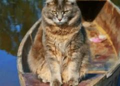Во время карантина кошка часто стала проводить время возле реки